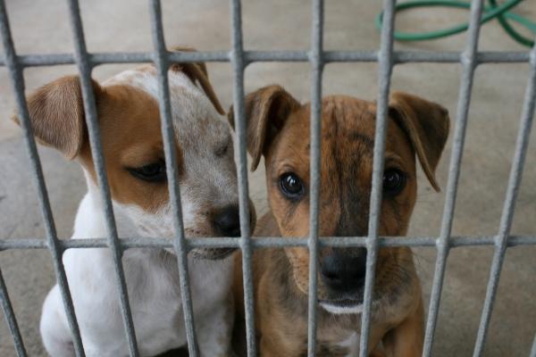 cachorros abandonados procedentes de camadas no deseadas