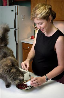 peligros de embarazo y los gatos