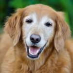 perros y gatos de edad avanzada