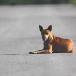 desorientación de animales con sindrome de disfunción cognitiva