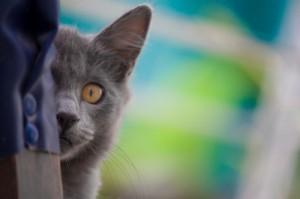 Planes de salud gatos mayores