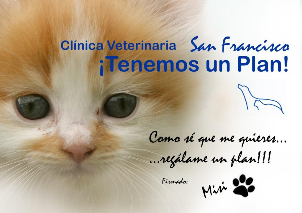 plan de salud para gatos