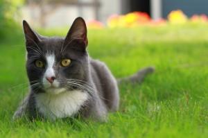 planes de salud de gato adulto