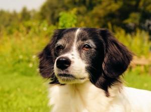 planes de salud perro mayor