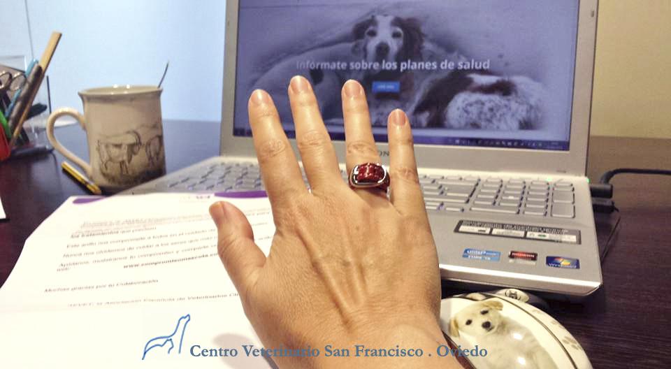 Compromiso mascota clinica veterinaria san francisco oviedo