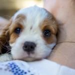cachorro nuevo en casa