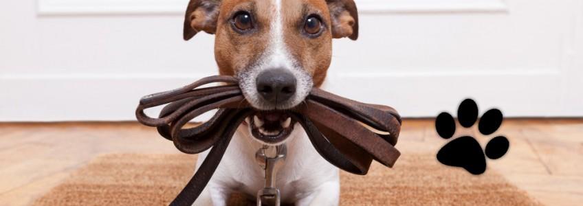 hacer ejercicio con perro mejora su salud