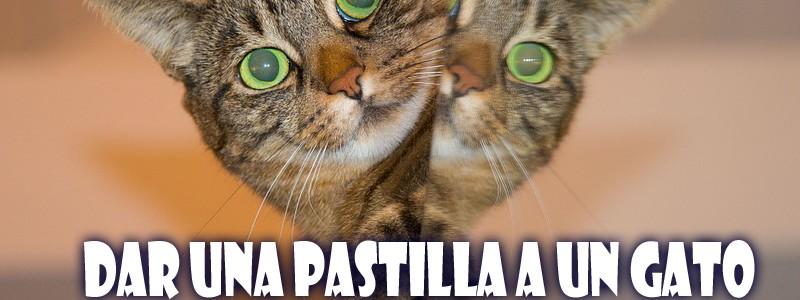 cómo dar una pastilla a un gato