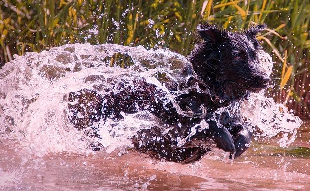 refrescar al perro en verano