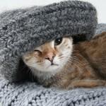 enfermedad de orina en gatos