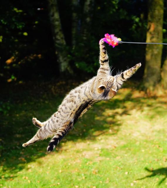 favorecer el ejercicio en fus en gato
