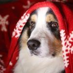 los 5 mejores artículos de veterinaria
