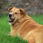 tratamiento de perros con sobrepeso