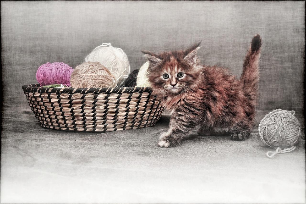 obstrucción por cuerpos extraños en gatos