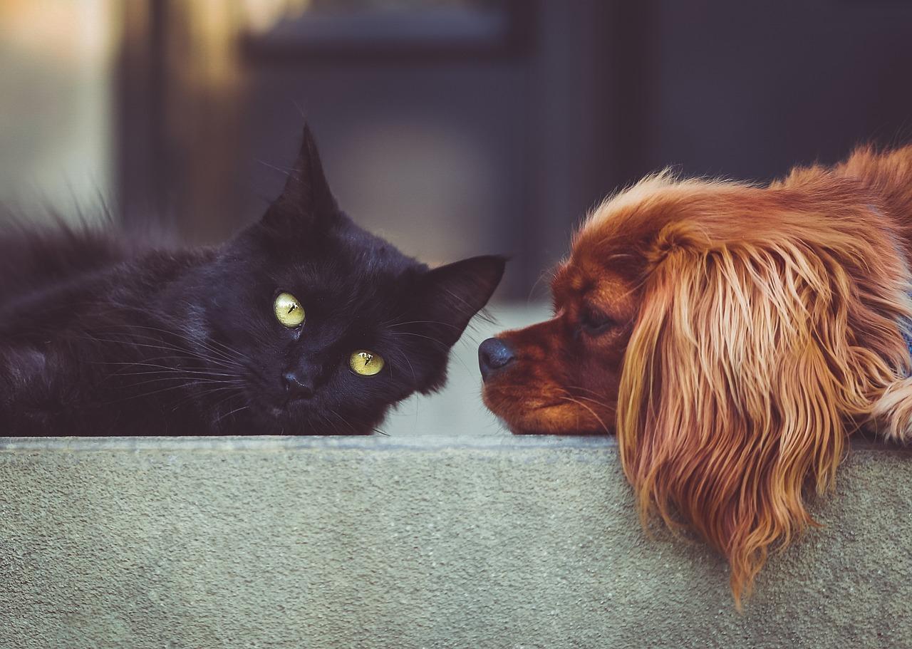 gato y perro en casa