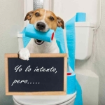 perro-en-el-cuarto-de-baño (1200x800)