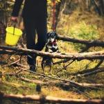 perro paseando en un pinar