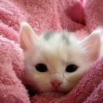 vacunación en gatitos