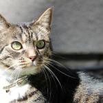 carcinoma de celulas escamosas en gato por el sol