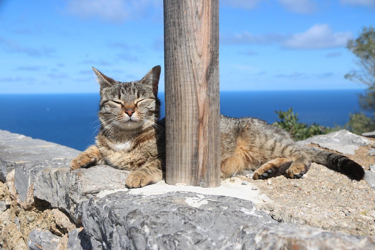 gato al sol
