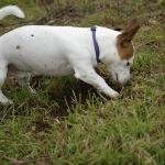 perro jugando con insecto