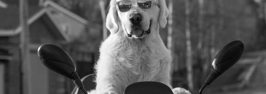 problemas de ojos en perro