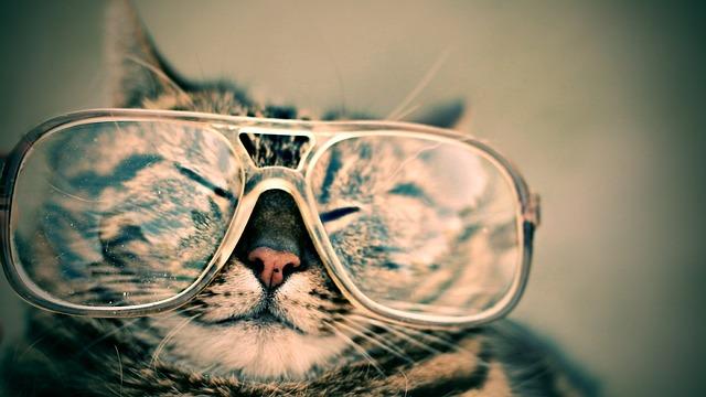 problemas visión el el gato