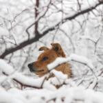 viajar con perro a la nieve
