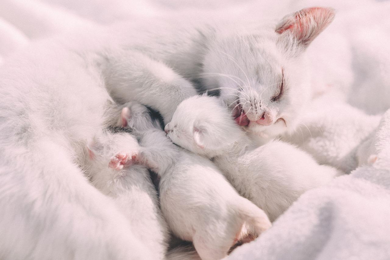 control de camadas de gatos