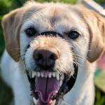 uso de bozal en perro que muerde