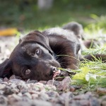 perro mestizo Clínica veterinaria oviedo