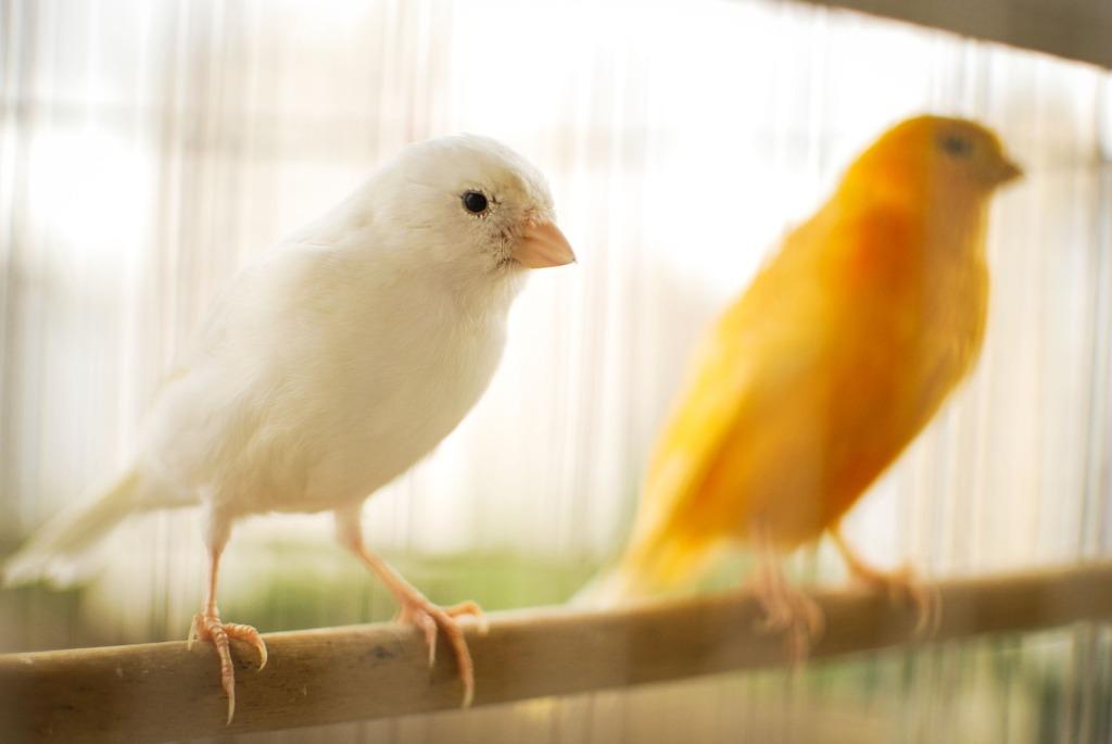 canarios clínica veterinaria oviedo