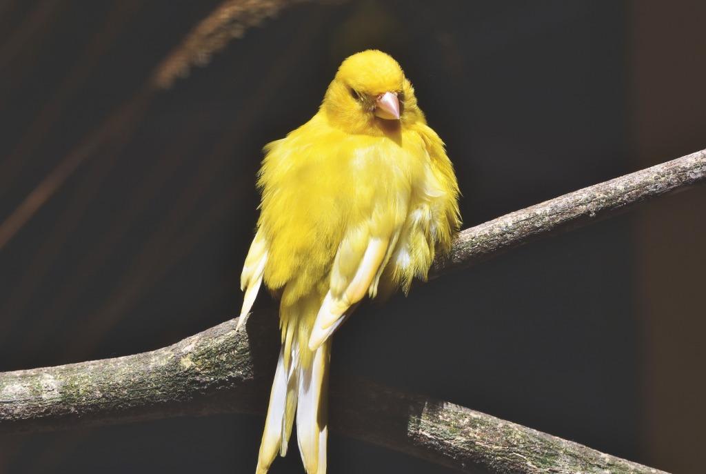 veterinario en oviedo para canarios