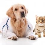 esterilización en gatos y perros