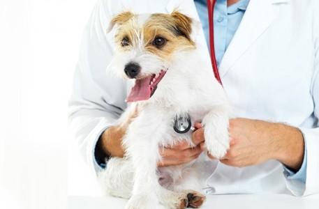 primera visita al veterinario Clínica veterinaria San Francisco