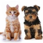vacunacion en perros y gatos-Clinica veterinaria  San Francisco