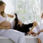 embarazo, toxoplasmosis  y gatos