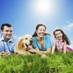 chequeo geriatrico en perros