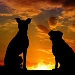 perros y leishmaniosis