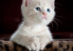 planes de salud de gatitos
