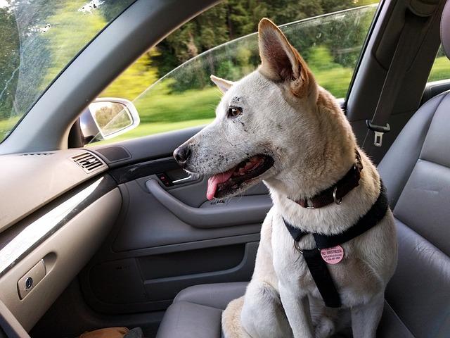 golpe de calor en perros en coches