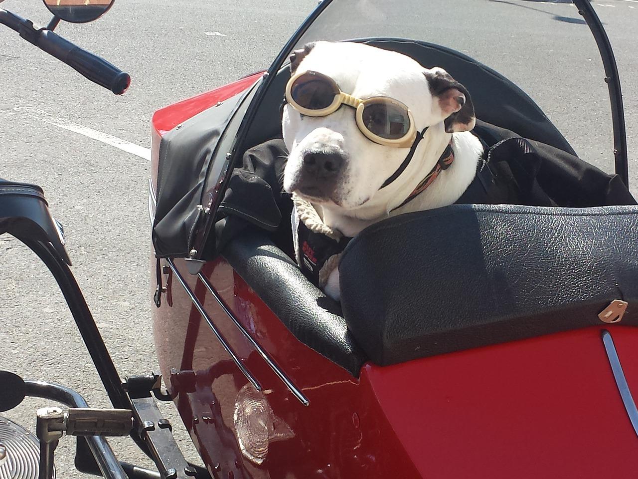 viajar con perro fuera de España