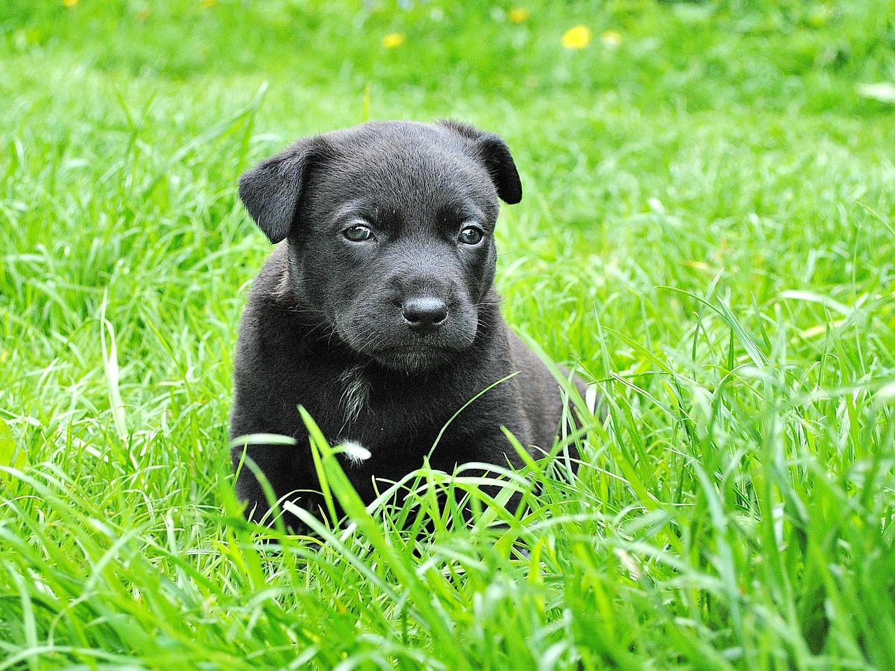 enseñar al perro a hacer pis en el campo