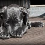 perro avergonzado por hacerse pis