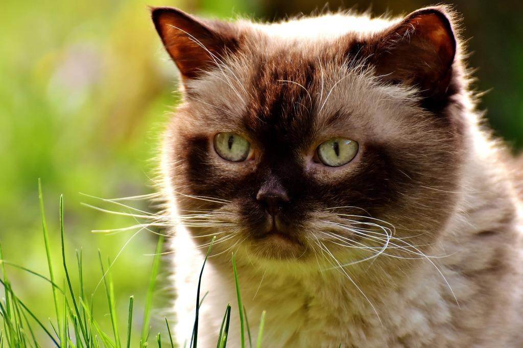 IRC en el gato mayor o viejo