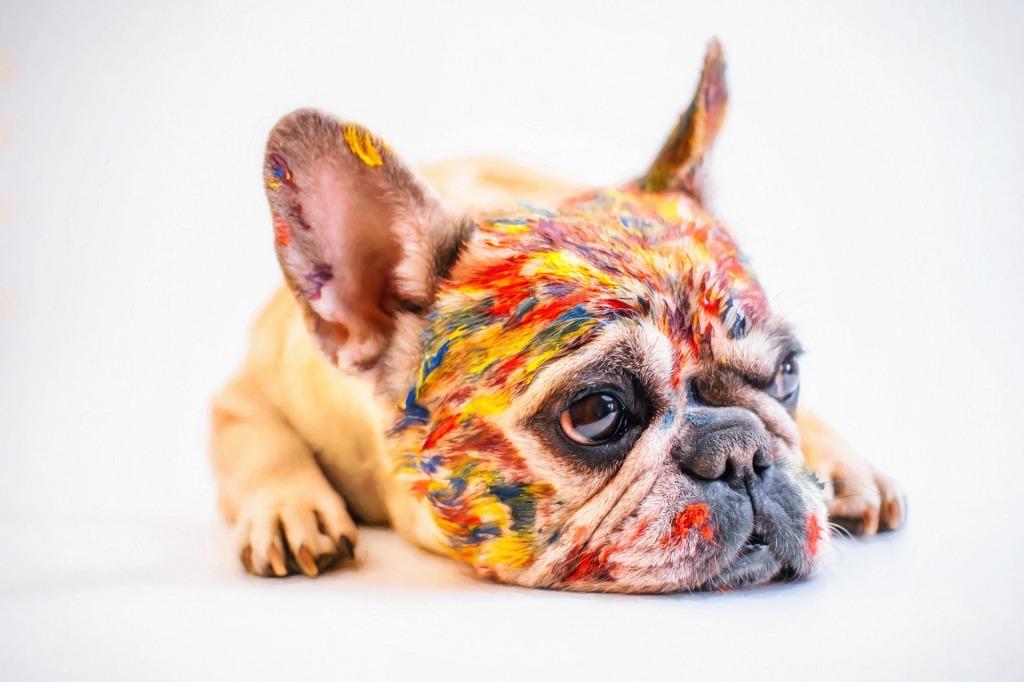 perro pintado por niños