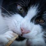 mi gato afila las uñas en casa