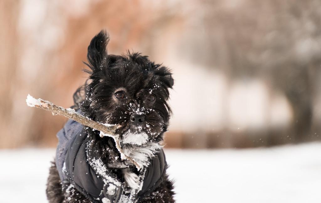 perros en la nieve consumen más energía